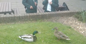 Ducks and Students